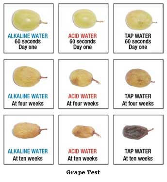 grape test that shows alkaline water giving more hydration